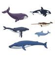 sea mammals cetacea vector image vector image