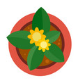 top view plant pot icon flat style vector image