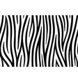 zebra skin seamless background on graphic art vector image