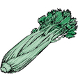 Celery vector image