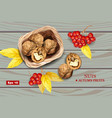 greek walnuts realistic wooden background vector image