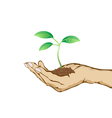 green plant growing in hand vector image vector image