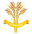 Label design for organic wheat vector image