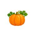 pumpkin autumn thanksgiving harvest vegetable vector image