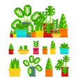 set house plants colourful plants isolated vector image