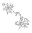 blossom apple branch vector image vector image