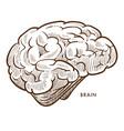 brain internal cerebral organ isolated sketch vector image vector image