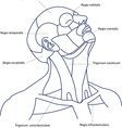 Human head contour vector image vector image