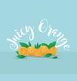 juicy orang vector image vector image