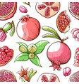pomegranate seamless pattern fruit and nature vector image vector image