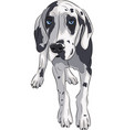 puppy of the great dane vector image vector image