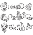 Stylized fruit set on a white background vector image