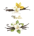 Watercolor vanilla vignettes vector image vector image