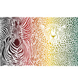 zebra and cheetah color pattern vector image vector image