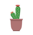 cactus with flower on top vector image
