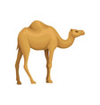 detailed flat icon of egyptian camel vector image