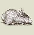 freehand drawing white cute domestic rabbit vector image