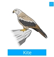 Kite bird learn birds educational game vector image vector image