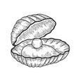 pearl shell sketch vector image