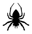 spider silhouette isolated black widow vector image