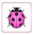Ladybug realistic cartoon icon vector image