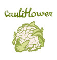 tasty veggies cauliflower vector image vector image
