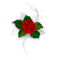 Blooming Red Rose vector image vector image