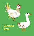 domestic birds rooster and goose vector image vector image