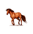 horse sketch of brown mustang stallion vector image vector image