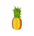 ripe pineapple with cut fresh and juicy tropical vector image vector image