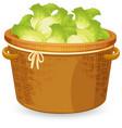 a basket of lettuce vector image vector image
