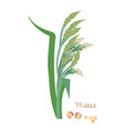 cereal seed plant with leaves vegetarian food vector image