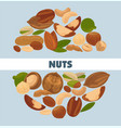 delicious nutritious nuts advertisement banner vector image vector image
