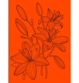 Lily flowers hand drawn vector image vector image