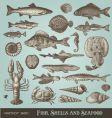set fish shells and seafood
