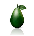 3d realistic whole avocado with leaf vector image vector image