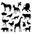 animal farm pet wildlife zoo icon vector image