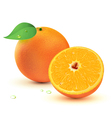 juicy oranges vector image vector image