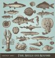 set fish shells and seafood vector image