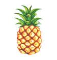 beautiful watercolor pineapple clip art vector image vector image