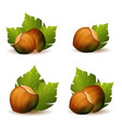 hazelnut with green leaves icons vector image