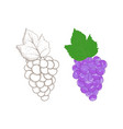 grapes colored and outline vector image