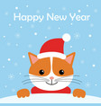 greeting card with cute cat wear winter outfits vector image
