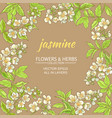 jasmine frame vector image