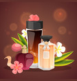 parfume bottles with flower aroma banner vector image