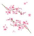Realistic sakura tree with pink petal
