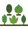 walnut linden oak maple and chestnut vector image