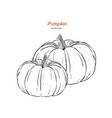 ector hand drawn set of pumpkin vector image vector image