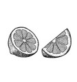 hand drawn lime or lemon sliced pieces set fruit vector image