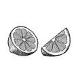 hand drawn lime or lemon sliced pieces set fruit vector image